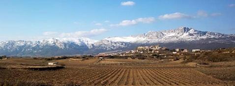 Artadi vineyards 478 x 175
