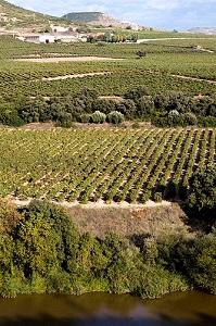Contino Vineyards slope 199 x 300