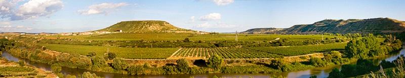 Contino vineyards and Ebro 800 x 155