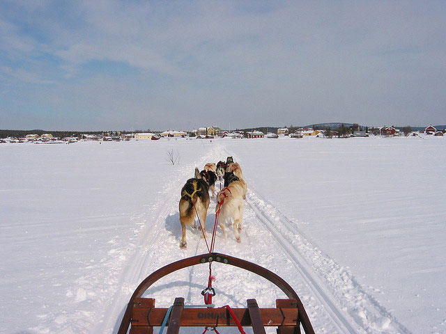 ice-hotel11-dogs-pulling