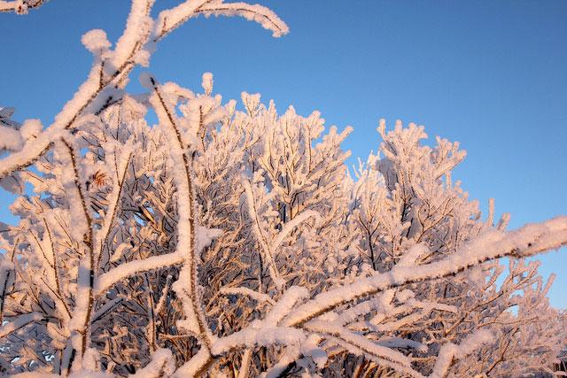 ice-hotel13-snow-tree