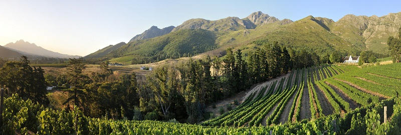 Franschhoek vineyards